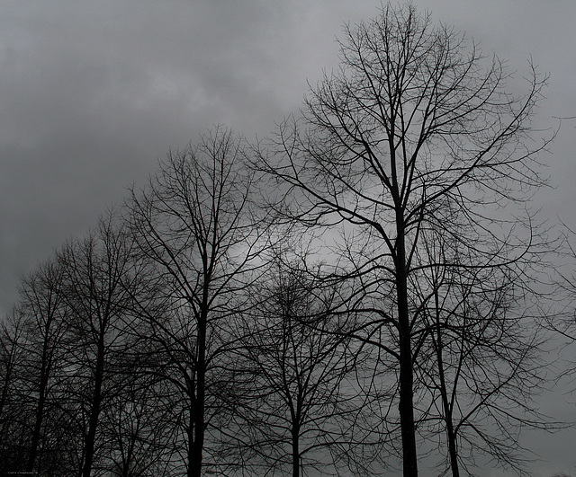 Set Against A Mournful Sky