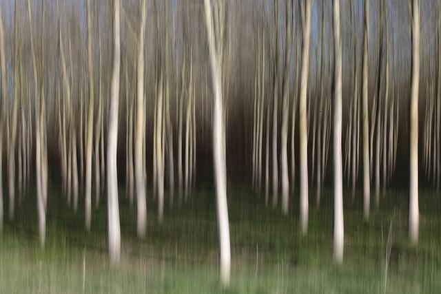 filé d'arbres