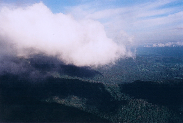 Up Above The Clouds, Springbrook, Queensland