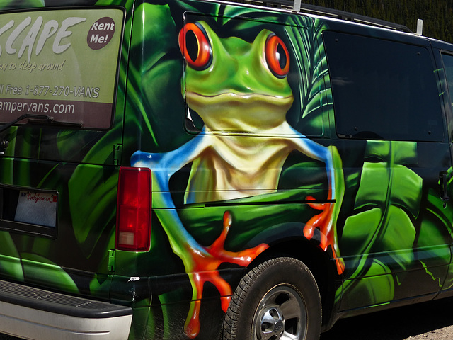 Tree Frog Campervan