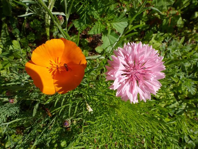 Kleine Glücksmomente - etaj feliĉaj momentoj / Blüten in meinem Garten - floroj en mia ĝardeno - fleurs en mon jardin - flowers in my garden
