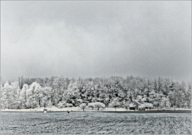 schneientägig/Snowday/ಹಿಮ ದಿನ
