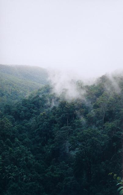 Mountain Clouds, Springbrook, Queensland