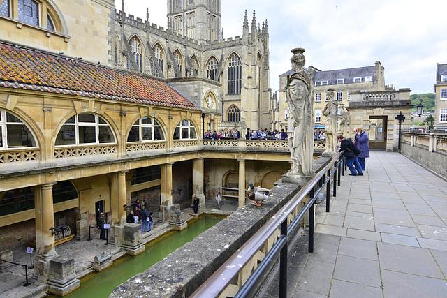Bath 2013 - Duck