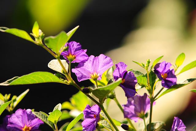 NICE: Parc Phoenix: des fleurs.