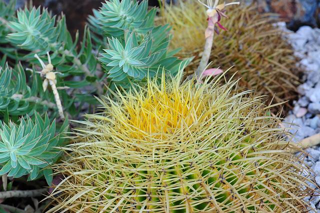 NICE: Parc Phoenix: Un cactus