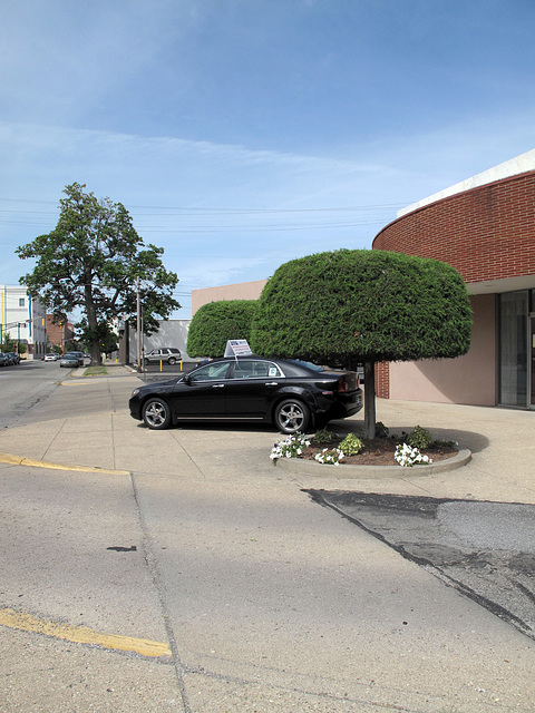 """Playful"" trees idea for downtown Terre Haute streetscaping."