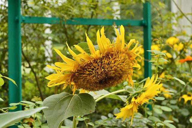 Sunny Side Down – New York Botanical Garden, New York, New York