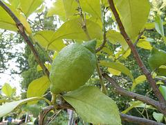 RUST: Europapark: Un citron.