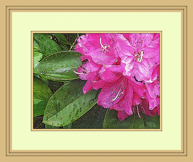 Flower framed