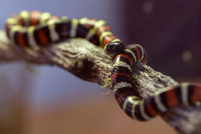 "222/365: ""Even if a snake is not poisonous, it should pretend to be venomous."" ~ Chanakya"