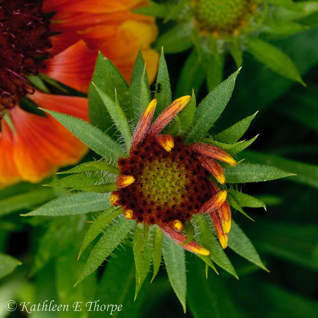 Spring Flower Macro 052213