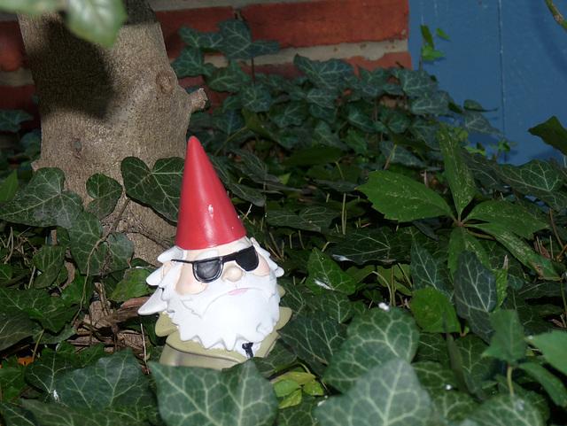 peepin' gnome