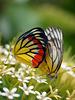 butterfly love...