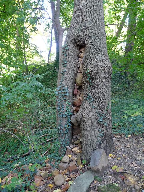 tree stuffed w/ rocks
