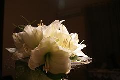 489 - Una flor