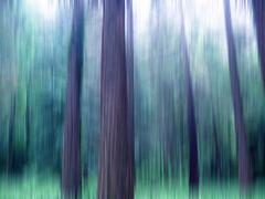 l'appel de la forêt : les pins, UNE ROMANCE