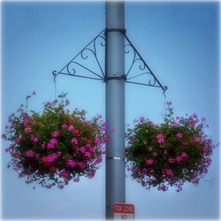 Summer Floral Decor in the City  ❖ EXPLORE ❖ PHOTO ❖