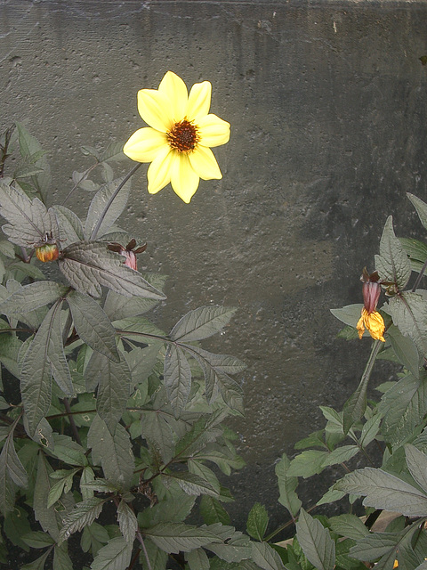 yellow on gray flower