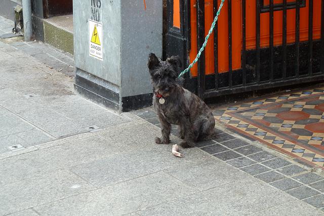 Wexford 2013 – Give a dog a bone