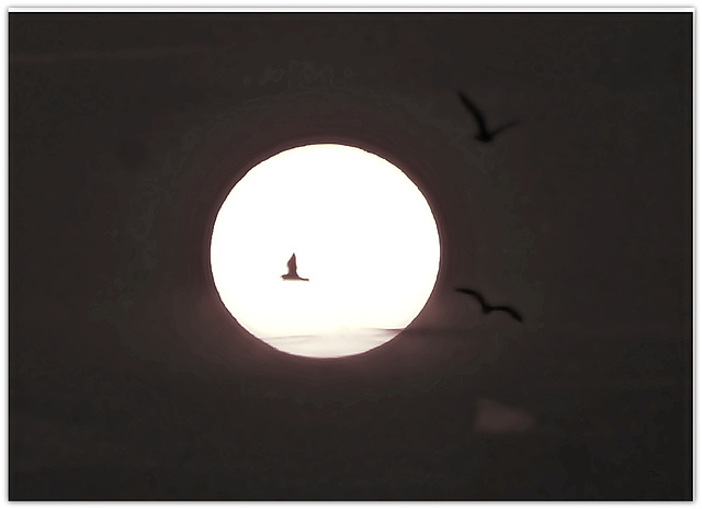 Night Migrations