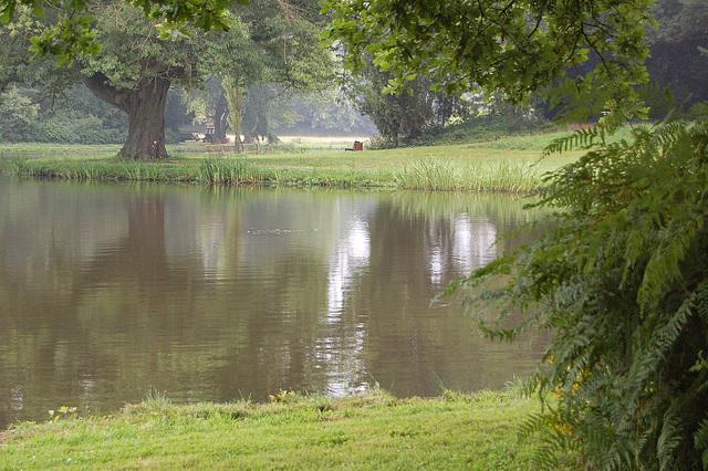 kverko ĉe lago (Eiche am See)