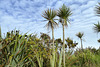 Rosslare 2013 – Palm trees