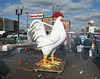 Near AutoZone, white rooster gets strapped to a rolling platform.
