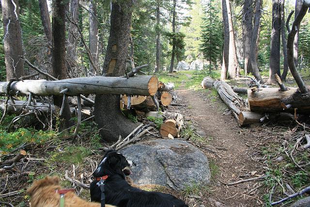 Trail maintenance...