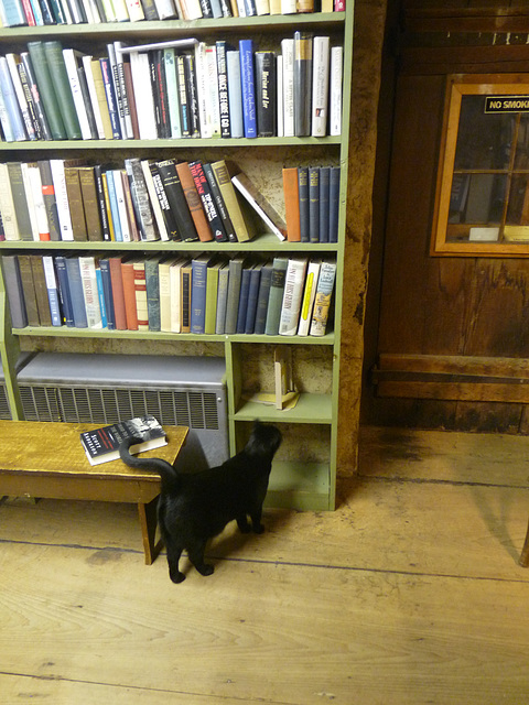 Baldwin's Book Barn cat