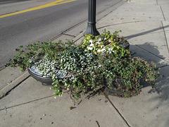 East Franklin Avenue 3 snowblasted flowerpots.