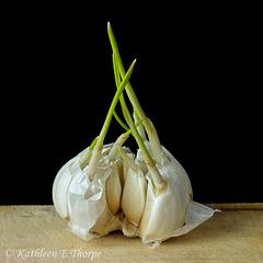 Garlic Cloves on Cutting Board SOOC