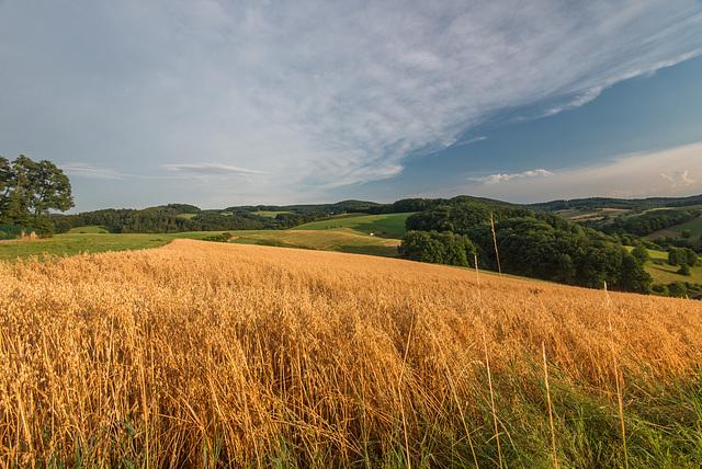 Schönes Getreide - 20130806