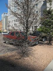 Ruined conifer!