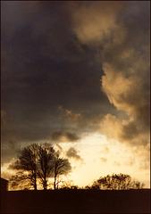 wild November twilight