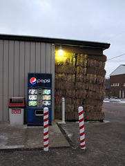 Strawbales and pepsis are yet lit-up in electric, as a sunrise struggles to ascend behind gloomy December overcast.