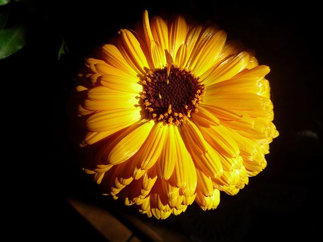 Flor iluminada