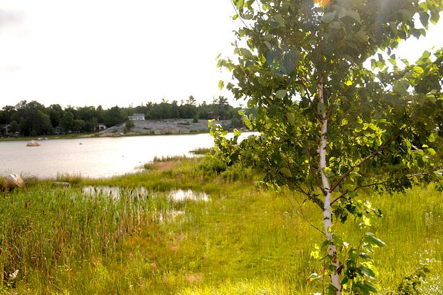 Rosenstein's Bay from Pine Island