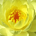 Water Lily Macro (Explored)