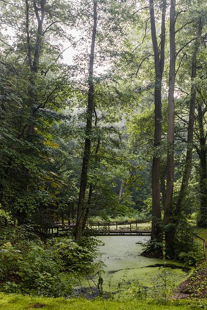 Worpswede - Barkenhoff - Steg im Regen - 20140706