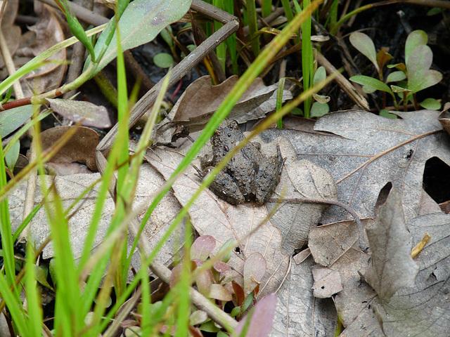 tiny frog is tiny