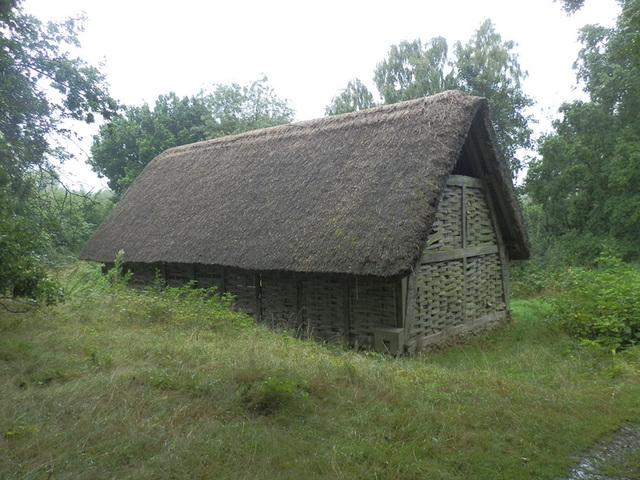 coamam (1146)