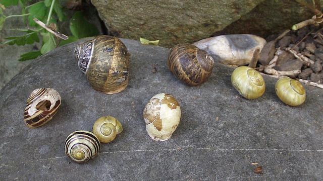 8 snails