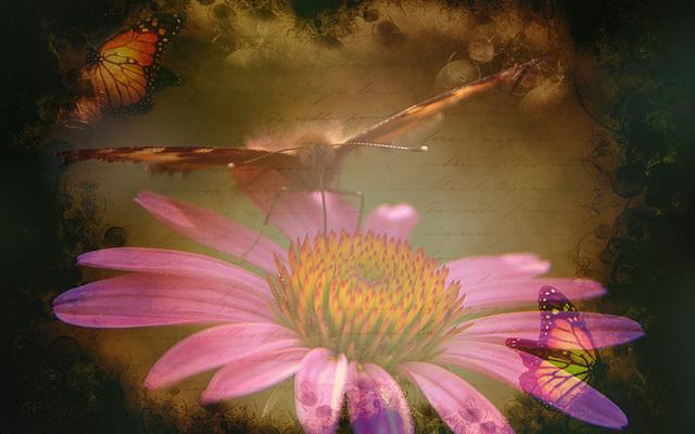 « Si le papillon s'est brûlé à la lumière, la lumière a connu les ailes du papillon et les a aimées. »
