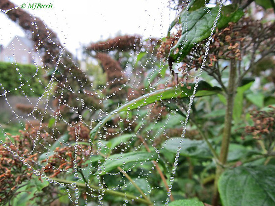 01 spiders web with raindrops