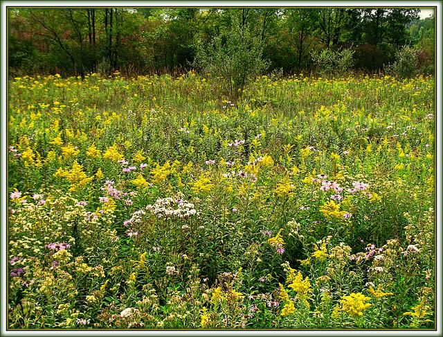Meadow Color Riot
