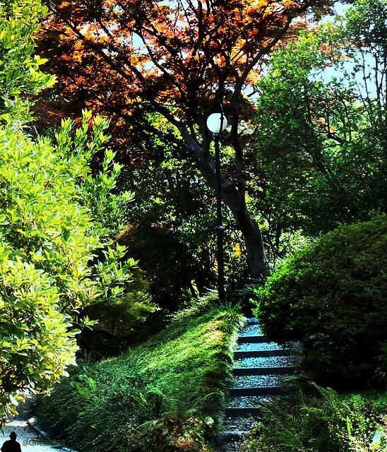 ...i giardini di agosto...