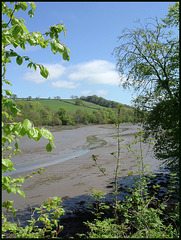 tide out at Tamerton Creek
