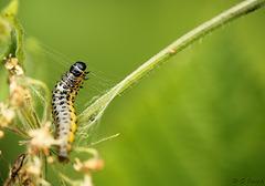 Caterpillar Weaving