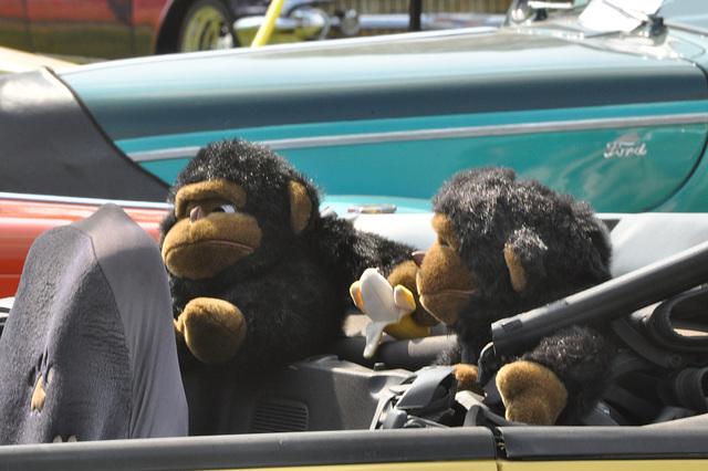 We're just monkeying around